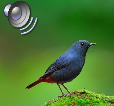配音知识网站要注意NL发音